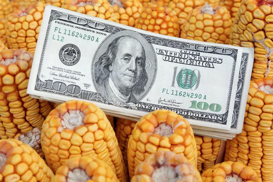 кукуруза на элеваторе цены