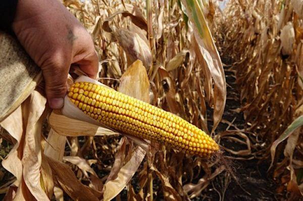 тех пор фото рекламы кукуруза в турцию подарка
