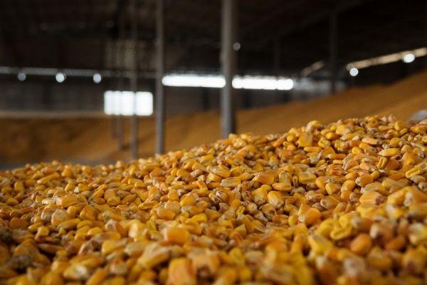 приемка кукурузы на элеваторе