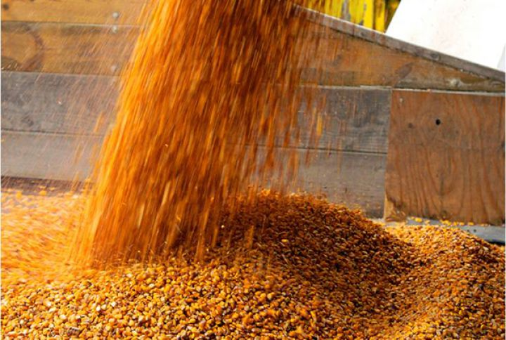 На элеватор поступило 720 т зерна пшеницы ремонт дверных петель транспортер т4
