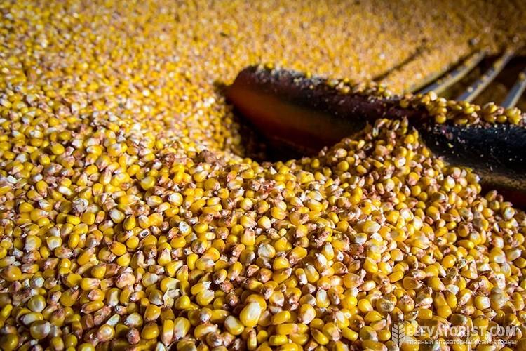 хранение кукурузы в элеваторах