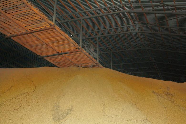 запасы зерна на элеваторах