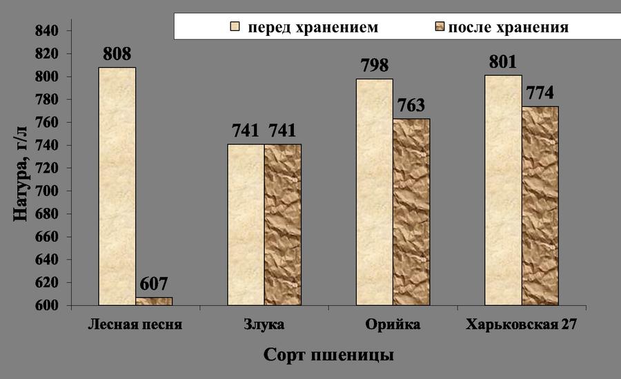 Изменение натуры зерна после хранения и заражения амбарным долгоносиком