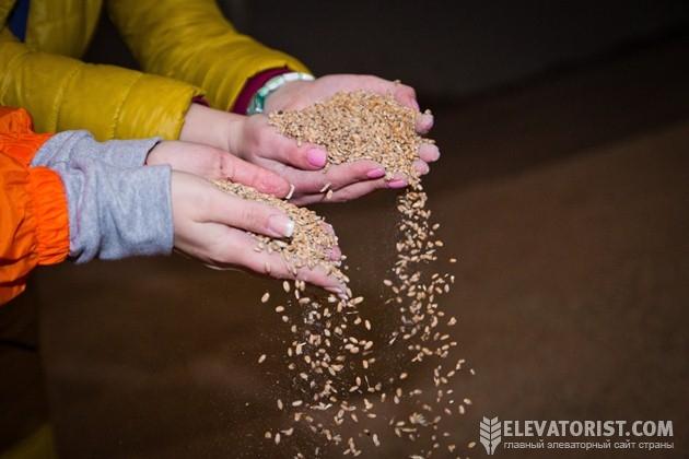 АгроЭкспедиторы не пропустили возможность сфотографировать пшеницу