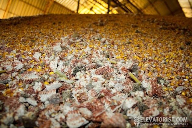 Сор в кукурузе