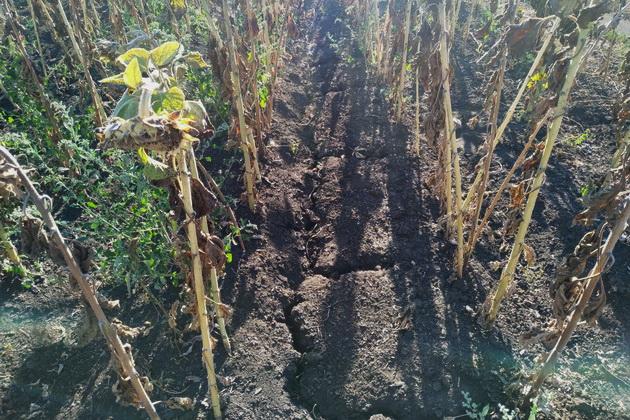 Почва на полях подсолнечника