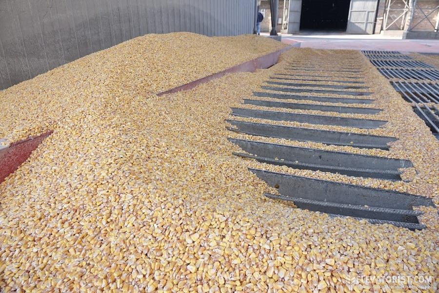 Приемка кукурузы на элеваторе спроектировать привод цепного конвейера состоящий из электродвигателя