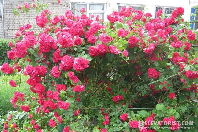 Цветы на Кролевецком КХП