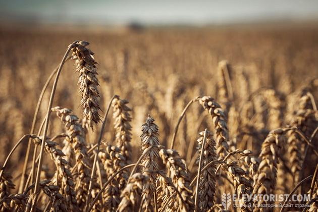 Рынок зерна оживился, цены пошли вверх