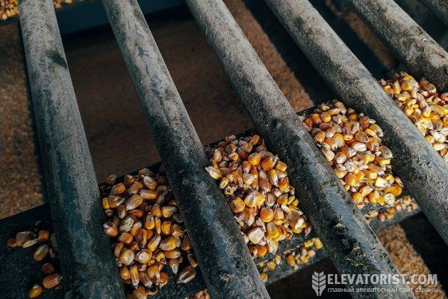 Кукурузные зерна подвержены дроблению больше всех остальных зерновых культур