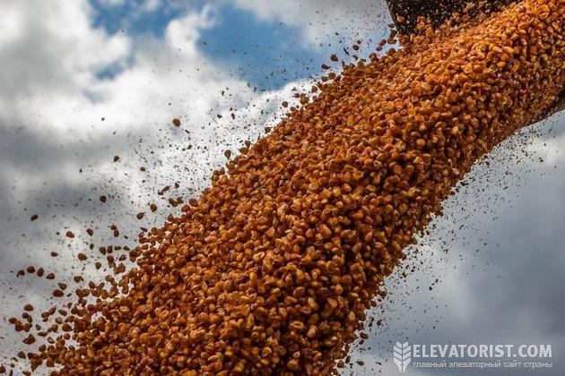 Пересушенное зерно повреждается легче всего