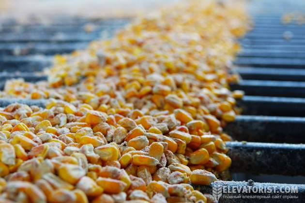 Кукуруза на элеваторе