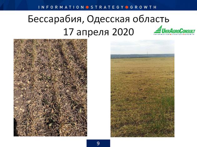 Состояние посевов в Одесской области